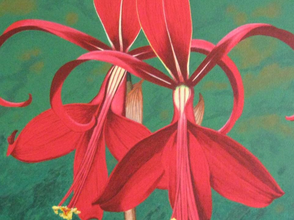 Aztec Lilies